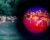 Pražská zoo zavádí noční prohlídky s termovizí, 90minutový program vyjde na 1000 Kč