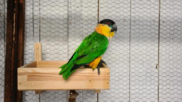 Přehled ptačích burz a výstav pro víkend 22. až 24. října 2021