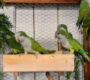 Přehled ptačích burz a výstav pro víkend 15. až 17. října 2021