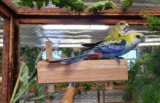 Přehled ptačích burz a výstav pro víkend 8. až 10. října 2021